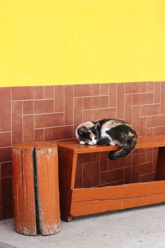 color-cat