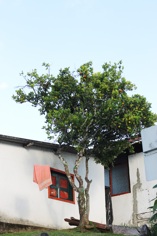 salento-colombia