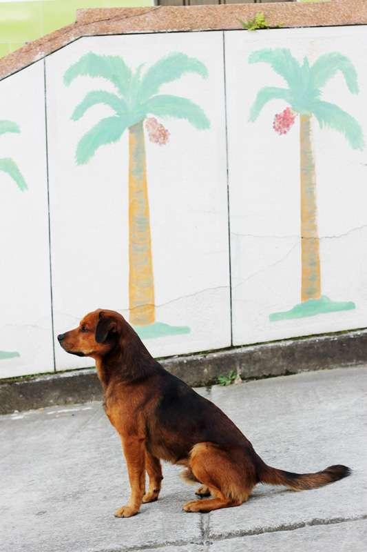 streetdog